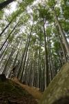 2012_Rychleby_0620-7036